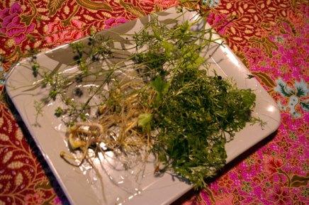 korianterin juuria