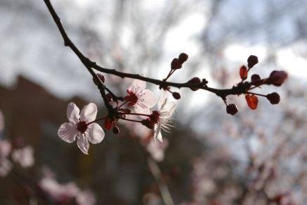 kevättä ilmassa