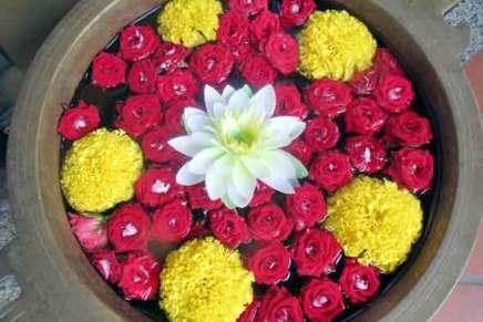 tropiikin kukkia