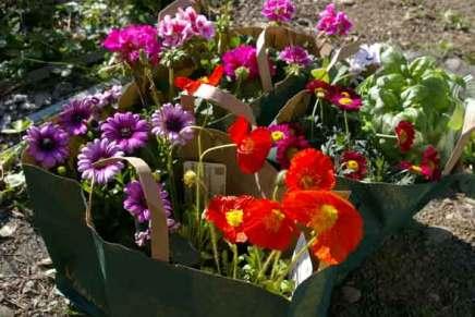 terveisiä puutarhalta
