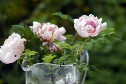 kesäkuun kukkia