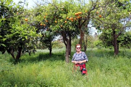 appelsiinilehdossa ja kukkakedoilla