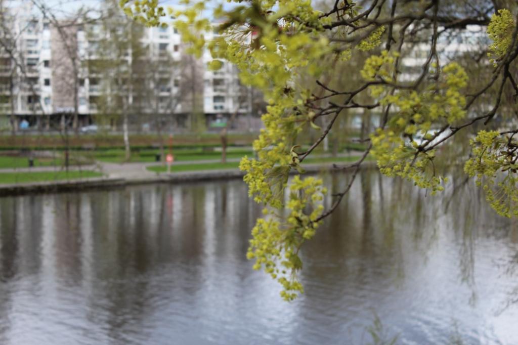 GALLERIA PAPERIHUONE NÄKYVISSÄ LAHDEN RANNALLA ARVI KARISTONKADULLA