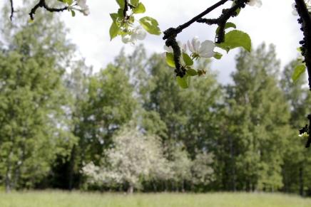 omenankukkatarhassa