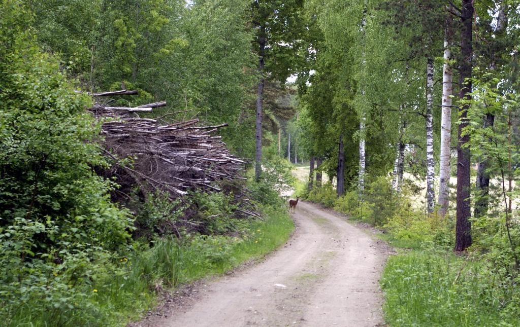 ENSIMMÄINEN PEURAKUVANI - EHKÄ JOSKUS VIELÄ LÄHIKUVAKIN