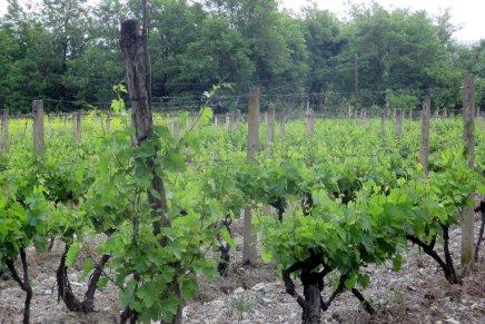 makedonian viiniseudulla