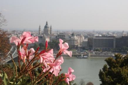 paikallisväriä budapestissä