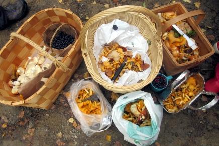 marttojen sieniretki