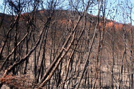 oliiviöljyä, tilaviiniä ja metsäpaloja saarikierroksella