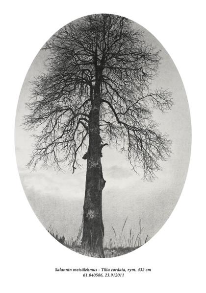 puiden muotokuvia