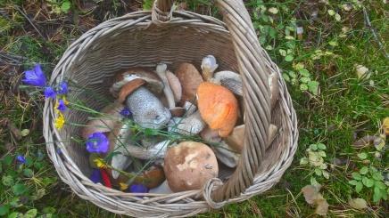 poikaset sienimetsässä jakalassa