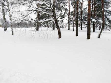 lunta lunta