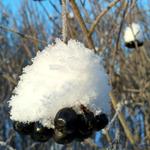 talvipaivia