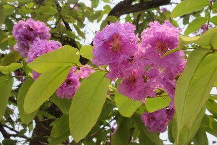 kevätaurinkoa
