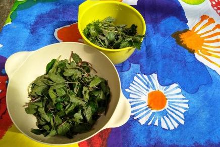 wokattuja villivihanneksia